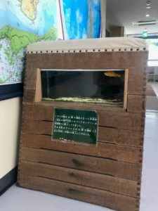 むろと廃校水族館の跳び箱の中にも金魚を飼育してました|高知市注文住宅SAI