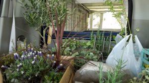 高知市K様邸の植物を載せて出発|高知市注文住宅SAI
