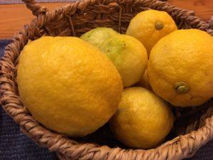 高知の良心市で売られている1000円のレモンの画像|高知市注文住宅SAI