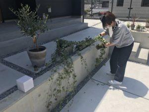 高知市K様邸にて植物を配置させている西村写真|高知市注文住宅SAI
