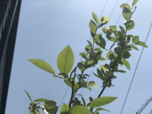 沢田マンションにて根付け途中の植物写真|高知市注文住宅SAI
